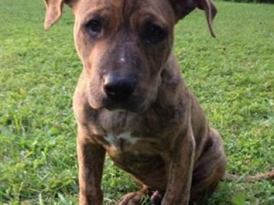 Samson is in Germantown, OH with his human that is struggling to cover her own medical bills. He is neutered anyway, thanks to his sponsor, Jill!