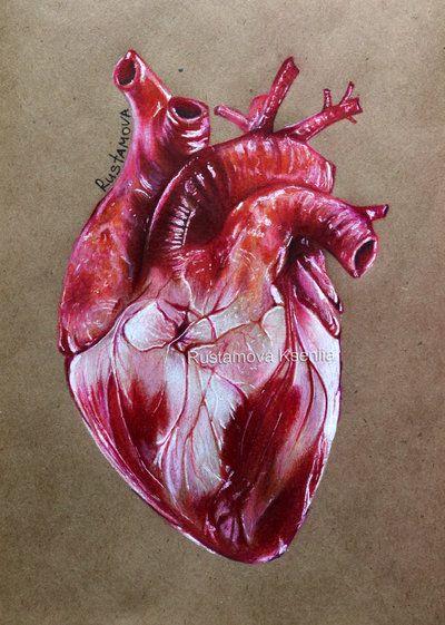 Heart by Rustamova | inspi | Pinterest | Anatomía, Corazón anatómico ...