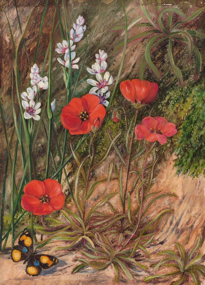 413. A South African Sundew And Associate.   Marianne North   Kew Gardens  Botanical