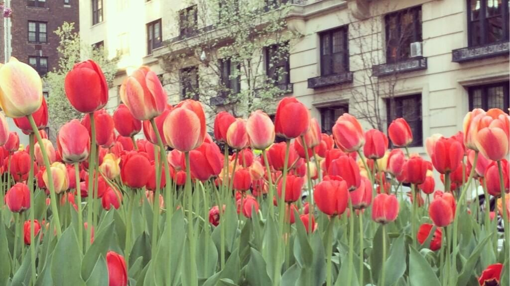 "nothing shouts ""spring in new york city"" like park avenue blooms. pic.twitter.com/4utLRSKDTz"