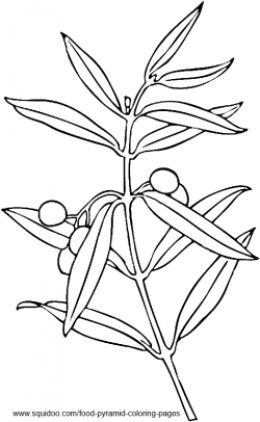 Olive Tree Coloring Pages Zaa Zytoon Olives