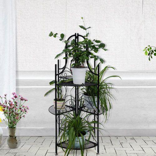 10 Piante Da Balcone Sempreverdi Giardinaggio Flora