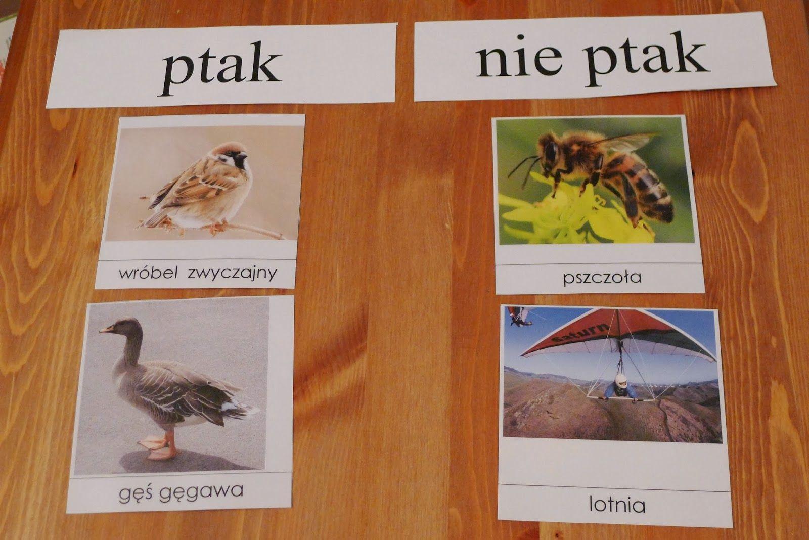 Wczesna Edukacja Zosi Wiat Zosi W Pigu Ce Ptasie Radio