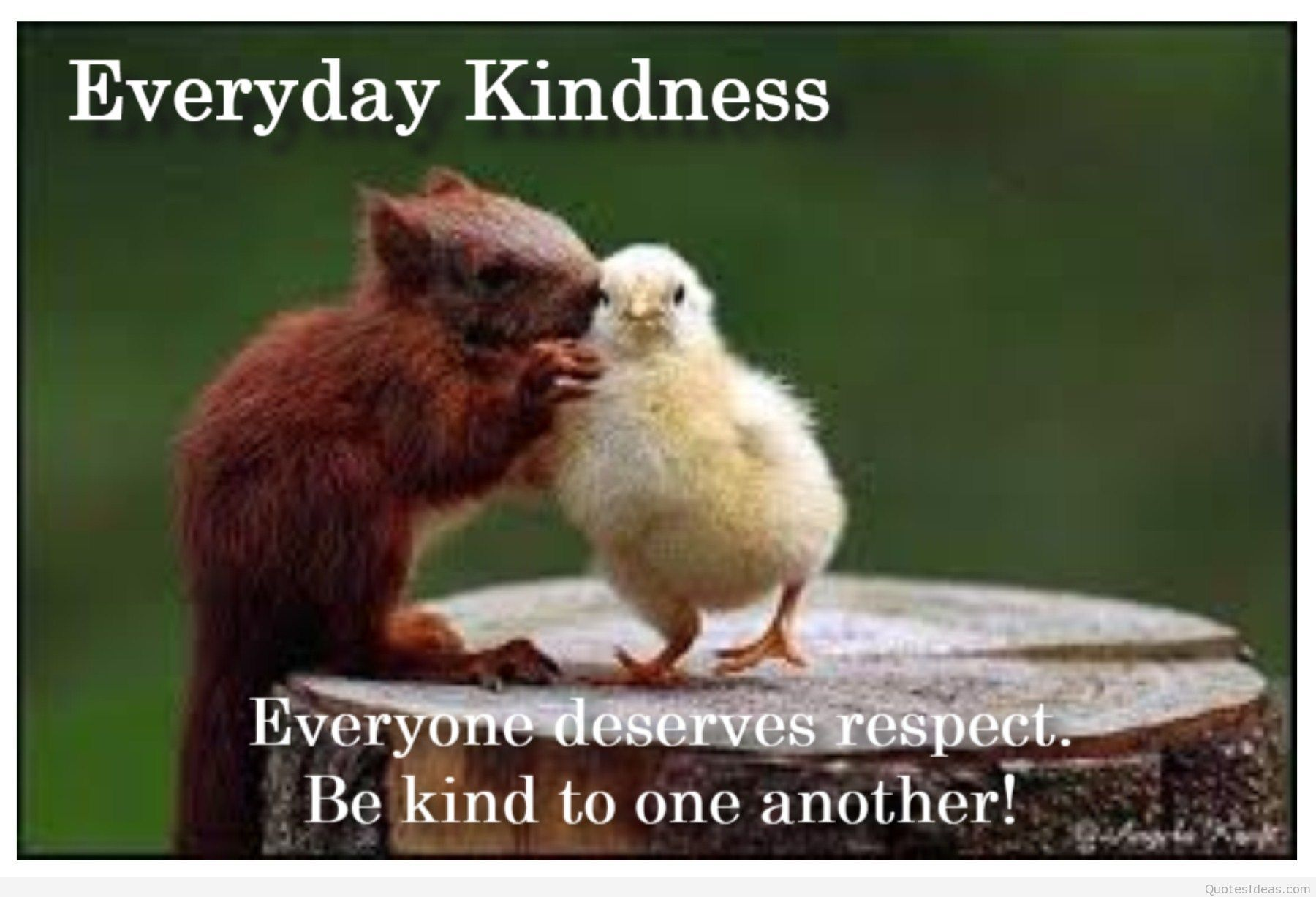 Quotes Respect Funny Quotes About Respectquotesgram  Animals  Pinterest