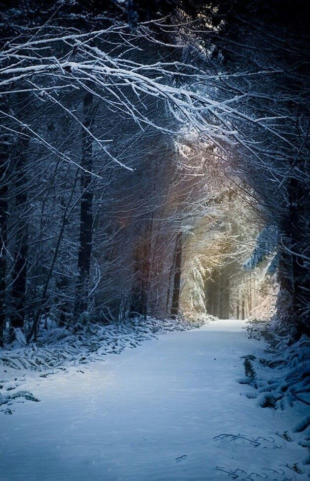 Winter Enchantment Scenery Forest Beautiful Nature