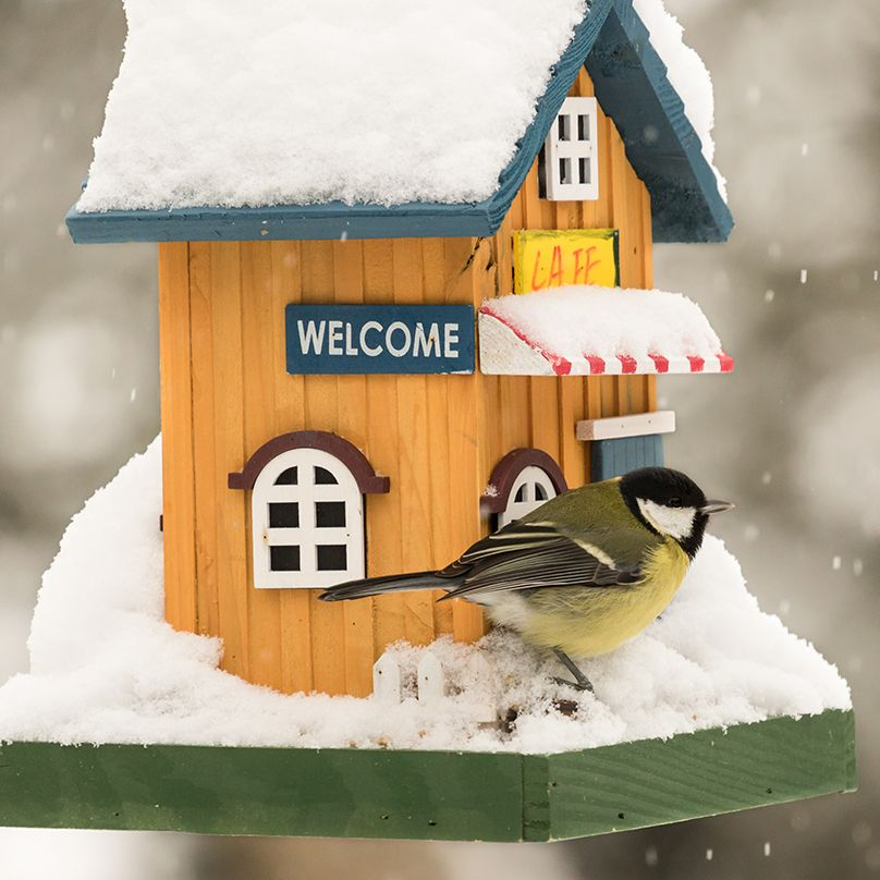 How To Clean And Winterize Your Bird House