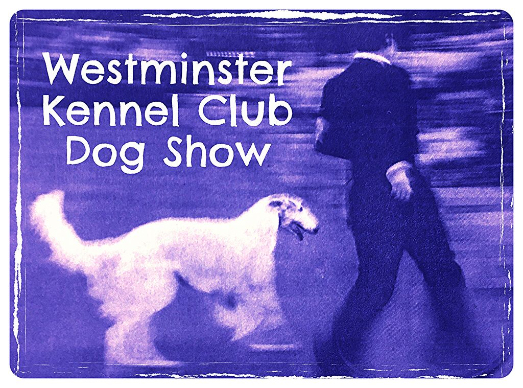 Luigi Speranza -- The Westminster Kennel Club Dog Show.