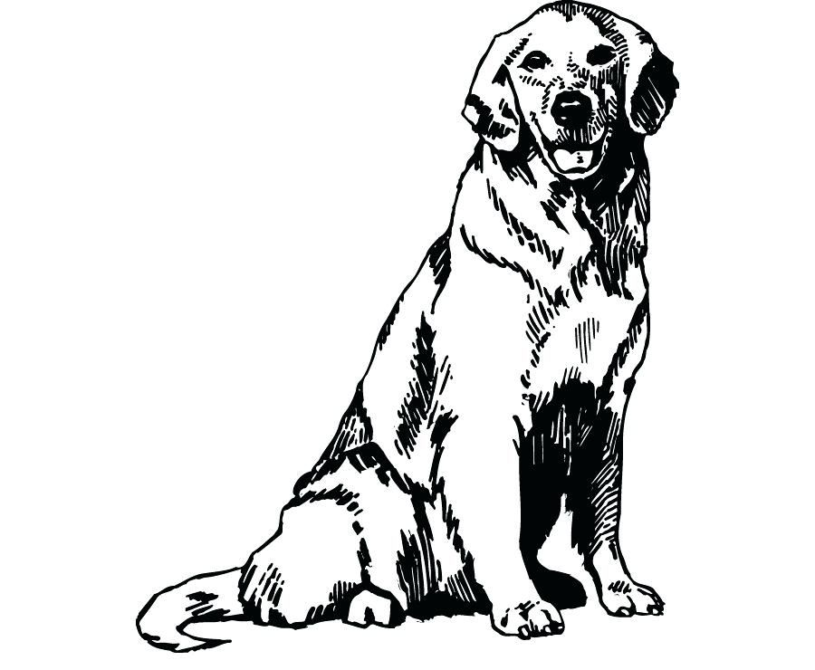 Golden Retriever Coloring Pages Best Coloring Pages For