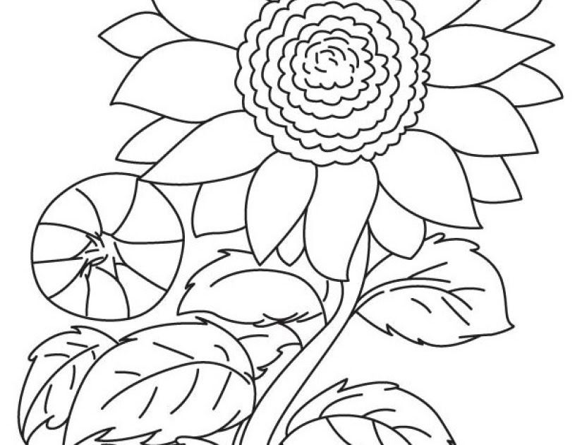 Gambar Kolase Yang Belum Diwarnai Gambar Kolase Yang Belum Diwarnaihttp Kumpulangambarhade Blogspot Com 2020 01 Gambar Bunga Menggambar Bunga Matahari Sketsa