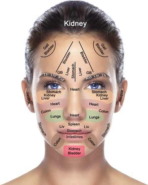 meridian line under the chin google search tcm acupressure chin muscles diagram meridian line under the chin google search