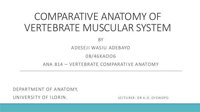 Vertebrate Comparative Anatomy Of Muscular System College