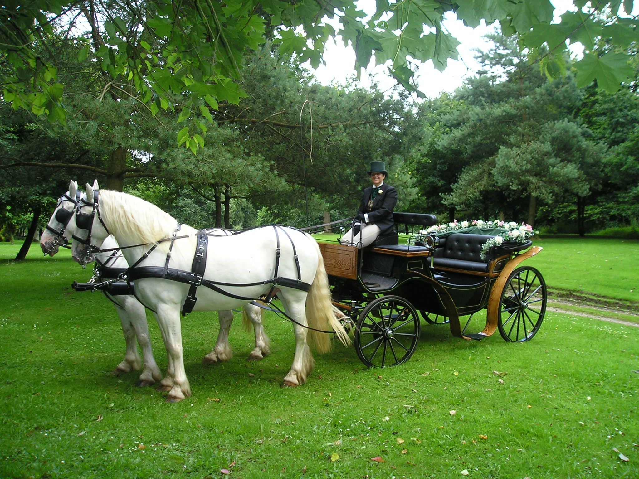 Somerset wedding cars vintage car hire and horse and for Car carriage