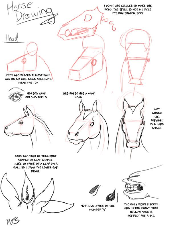 Horse_Drawing__Heads_by_modesty., how to draw a horse, horse anatomy ...