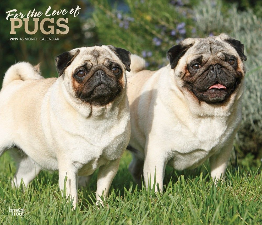 For The Love Of Pugs 2019 14 X 12 Inch Monthly Deluxe Wall
