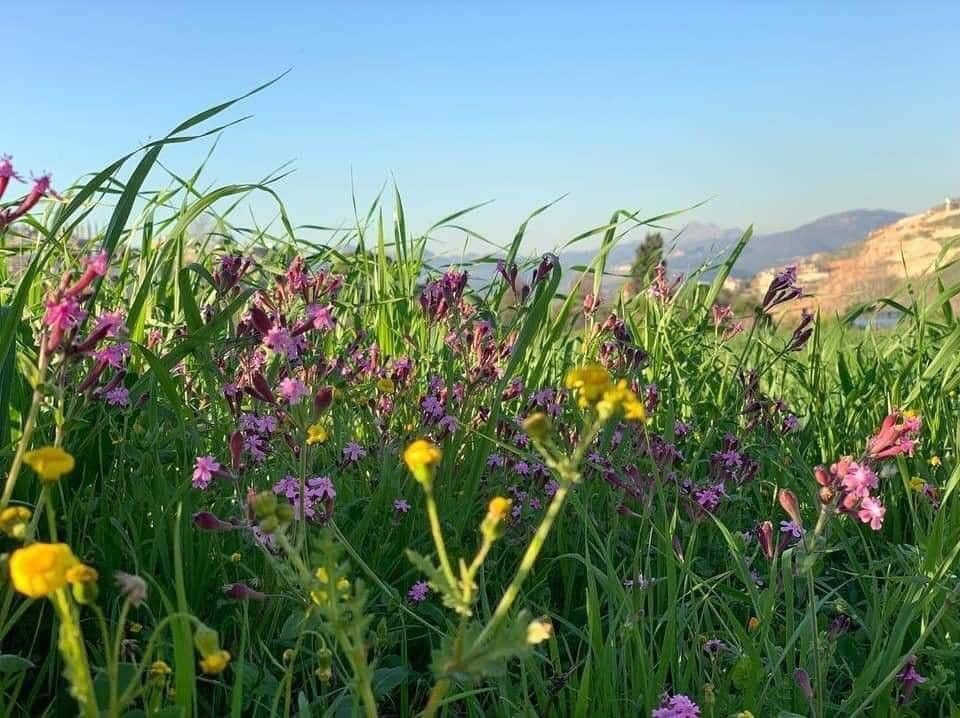 من الزهور في محمي ة وادي الحجير السلوقي جنوب لبنان Plants