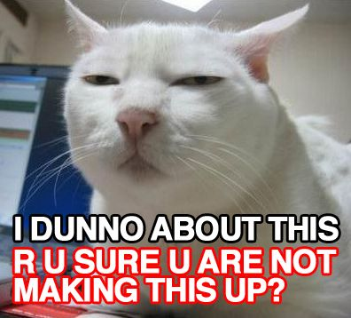 Serious Cat Google Search With Images White Cat Meme Cat Memes Animal Jokes