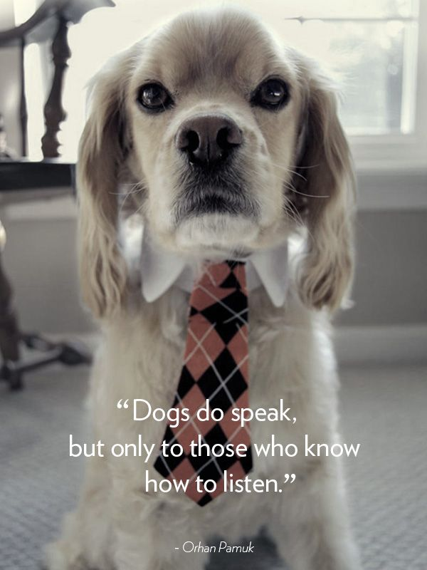 40 Dog Quotes That Will Make Your Heart Melt Dog Quotes Dogs Animal Quotes