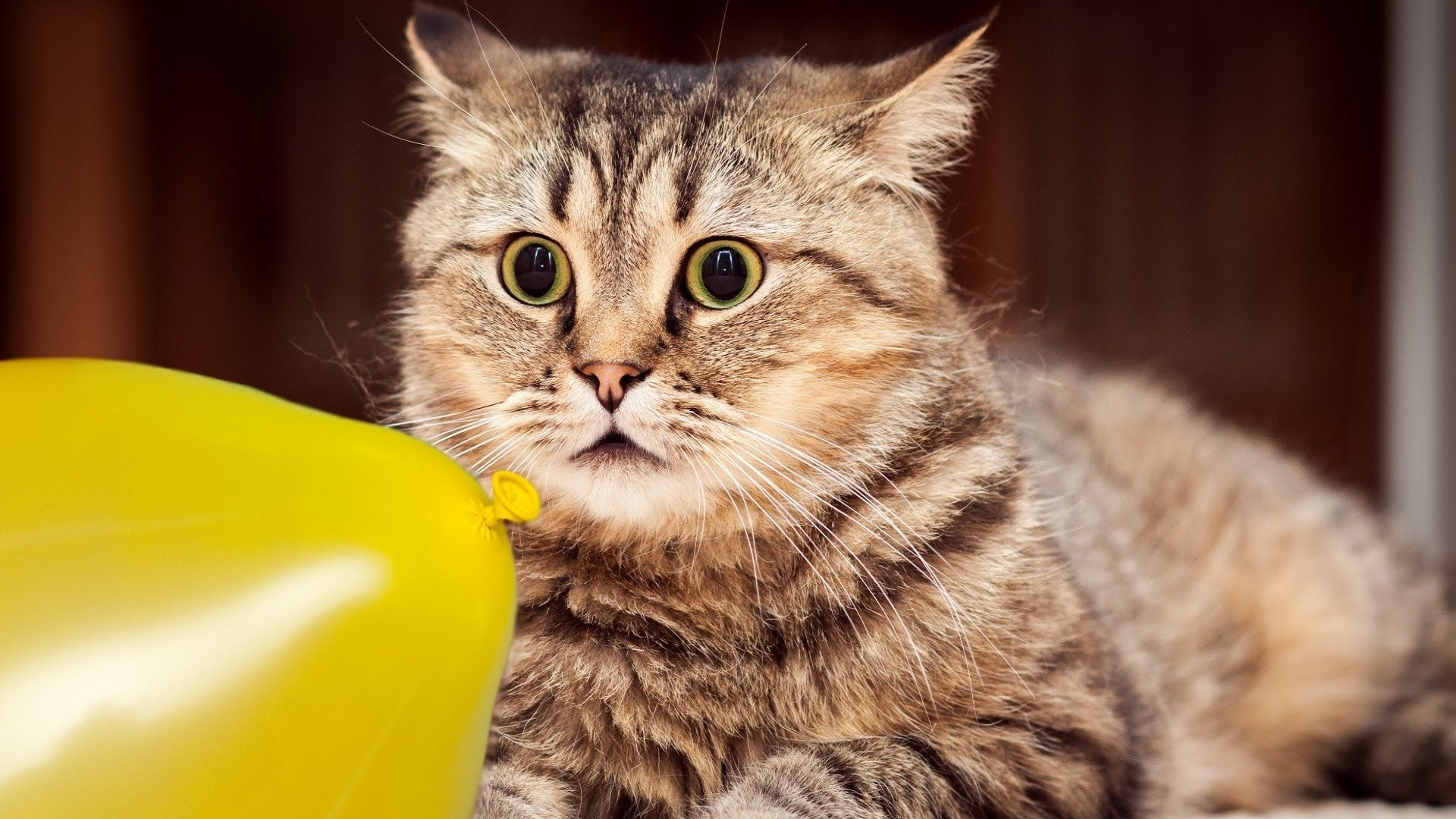 Cats And Dogs Vs Balloons Funny Animal Compilation Funny Cat Wallpaper Cat Wallpaper Kittens Funny