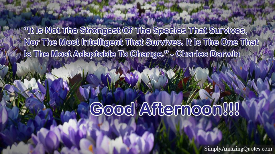 Good Afternoon #goodafternoonpost #motivationalquotes #inspirationalquotes #quotes https://simplyamazingquotes.com/it-is-not-the-strongest.html