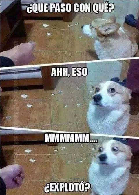 Todo En Espanol Animal Memes Funny Animal Pictures Funny Animals