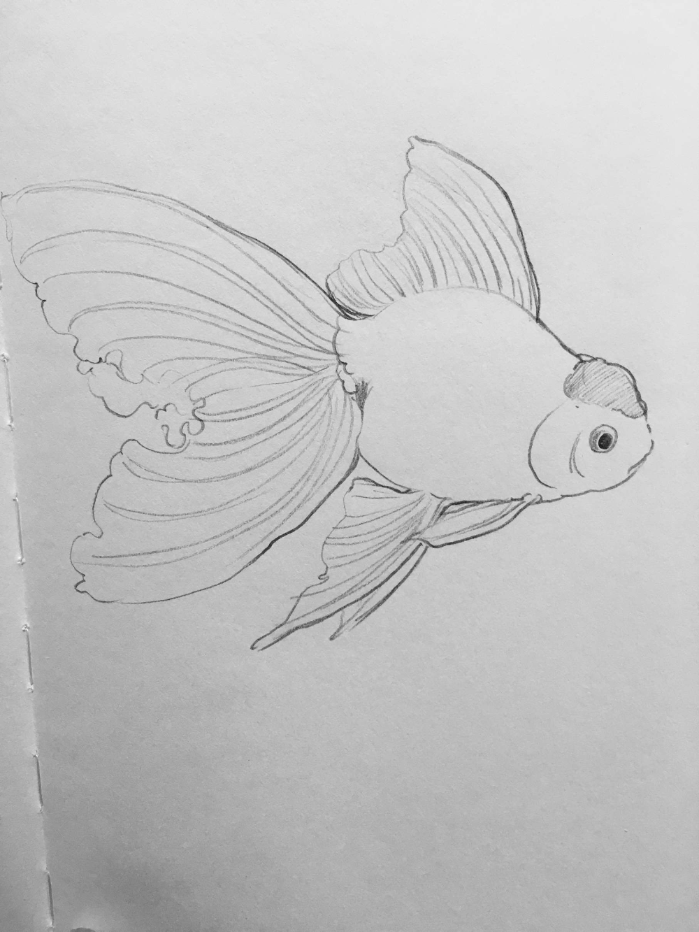 Goldfish Pencil Sketch And Drawing A Fish Drawings Drawings Fish Art