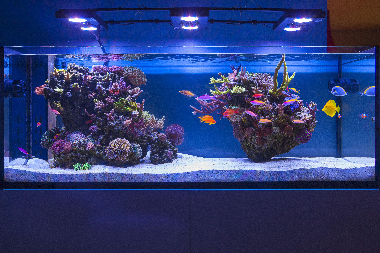 Elos 160 Aquarium Saltwater Aquarium Reef Tank Aquascaping Aquarium