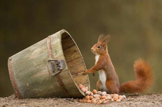 Squirrel. Photographer Edwin Kats captures beautiful images of animals