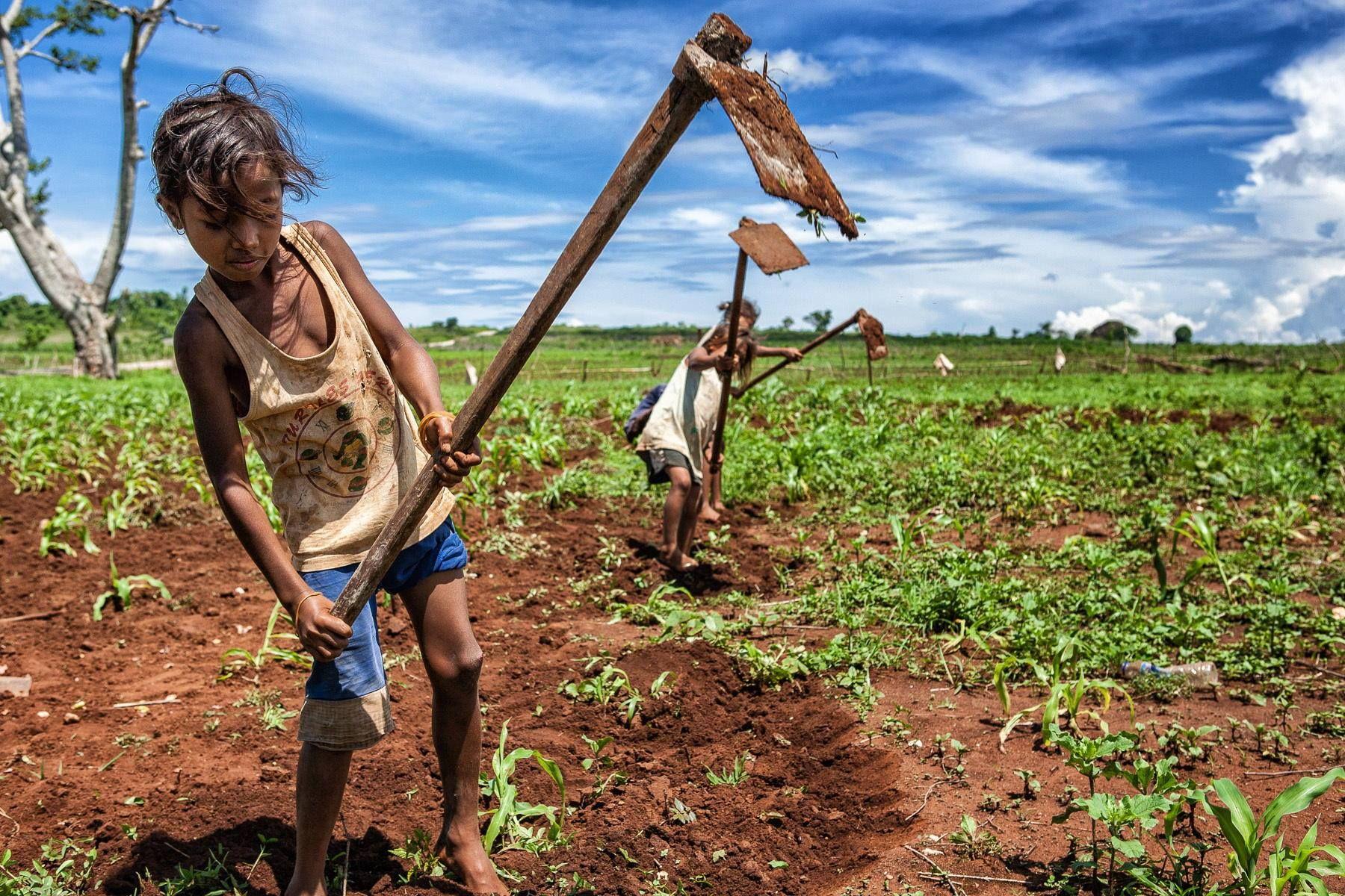 EastTimor, girls were working in the corn field. It is