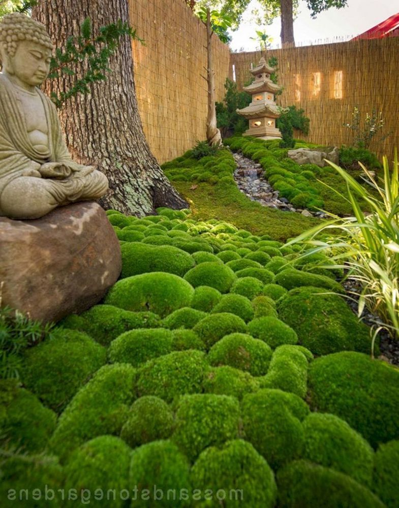 Cushion Moss Zen garden design, Small japanese garden