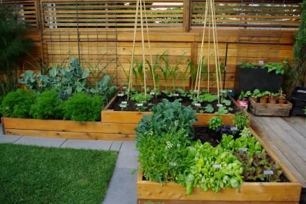 Aloe Designs designed a raised custom cedar wood vegetable bed that's packed and compact, filled with carrots, kale, garlic, corn, beans, arugula, peppers, squash, lettuces, kale and basil.