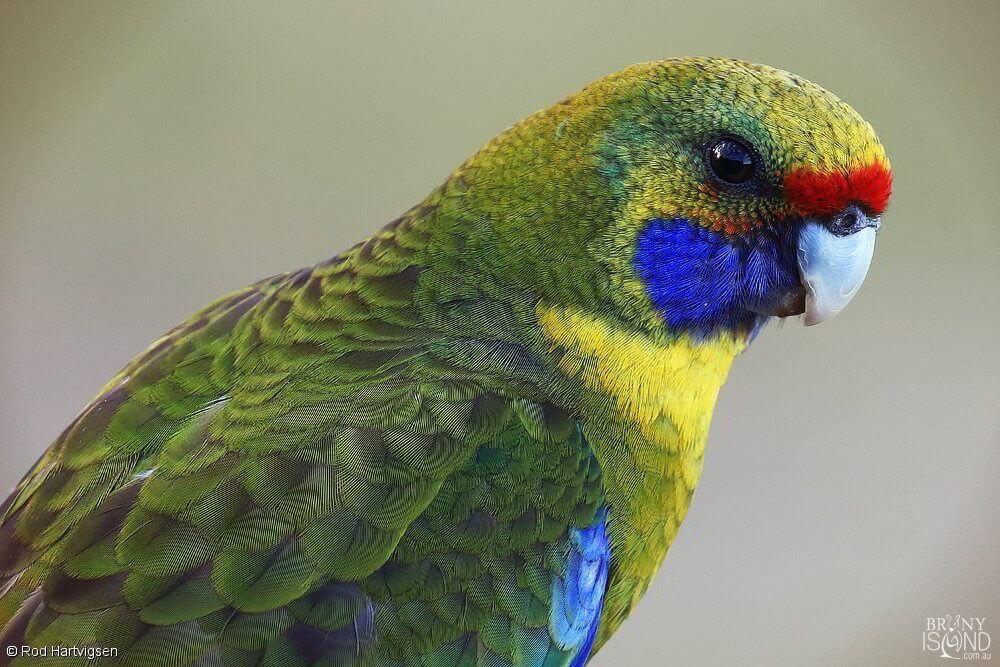 Rainbow Colour Parrot Colorful Birds Rainbow Colors Color