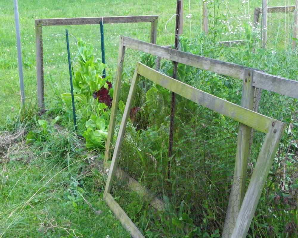 Vegetable garden plans for beginners ayanahouse - The Fence To My Home Kitchen Garden Is Open