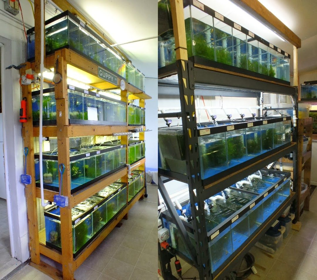 Fish aquarium business - Current Fishroom Fish Breedingaquarium
