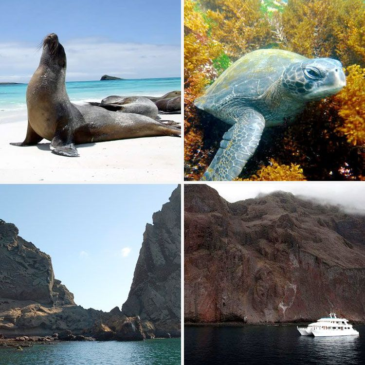 Tips To Discover The Galapagos Islands Several Five Star