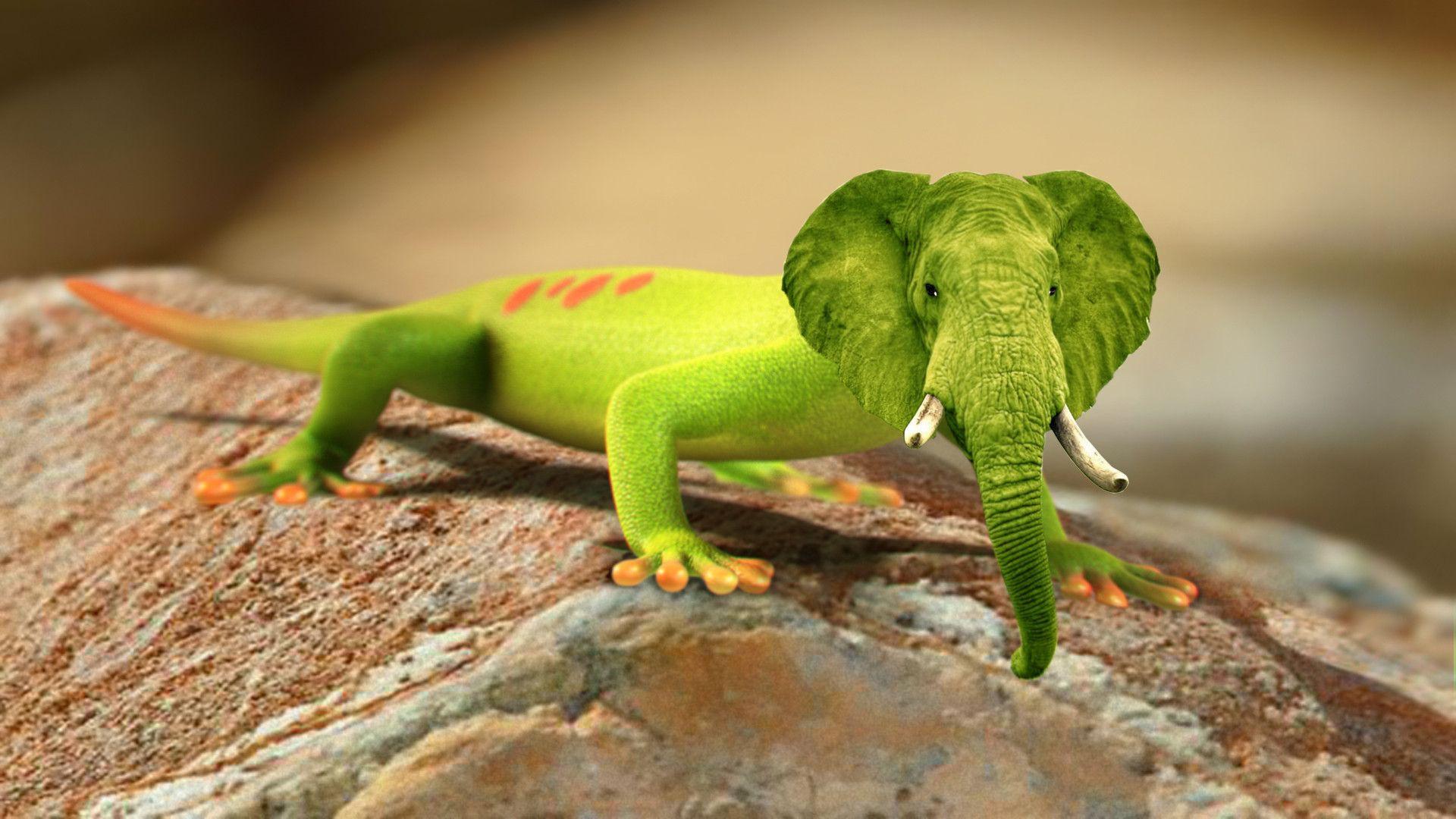 hybrid animals bird - Google Search | Animals, Lizard image