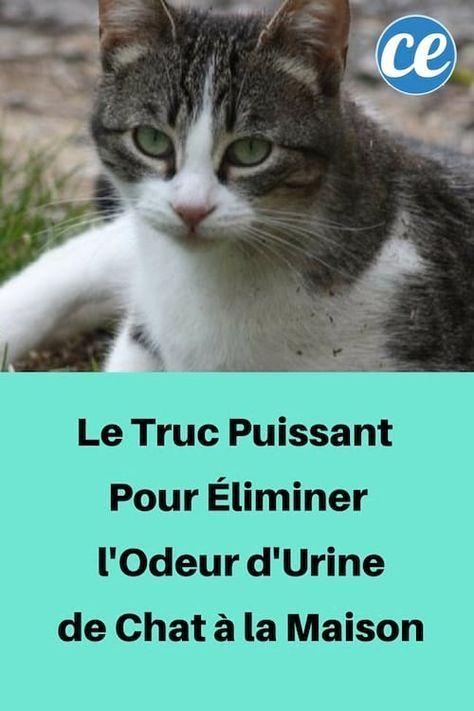 Le Truc Puissant Pour Éliminer l'Odeur d'Urine de Chat à ...