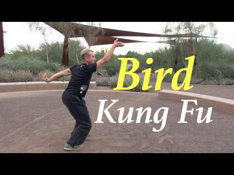 Blue Belt Material - Learn a Bird Form - Kung Fu & Tai Chi Center w/ Jake Mace - YouTube http://subscriptions.viddler.com/jakemacekungfu Bird Style Kung Fu - YouTube