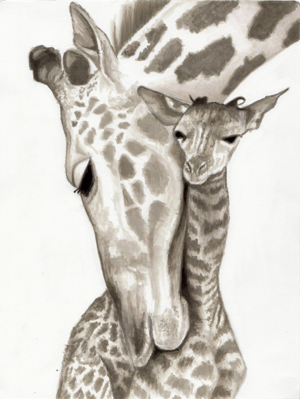 Images For > Drawing Of A Giraffe Head | Giraffe ...
