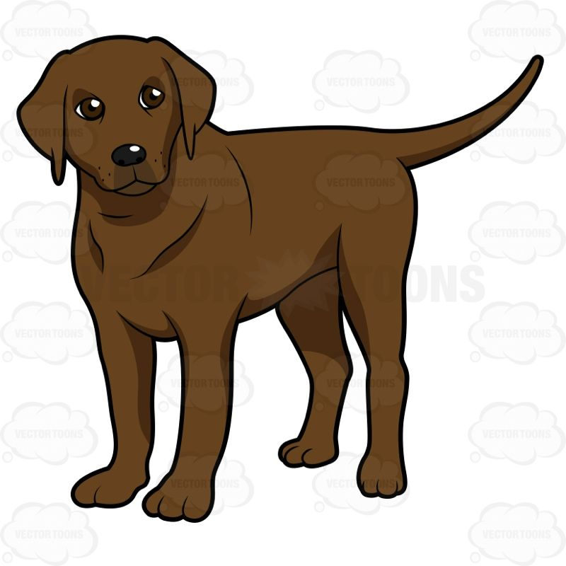 Young Chocolate Lab Standing And Looking Slightly Left Puppy Clipart Dog Drawing Cartoon Dog