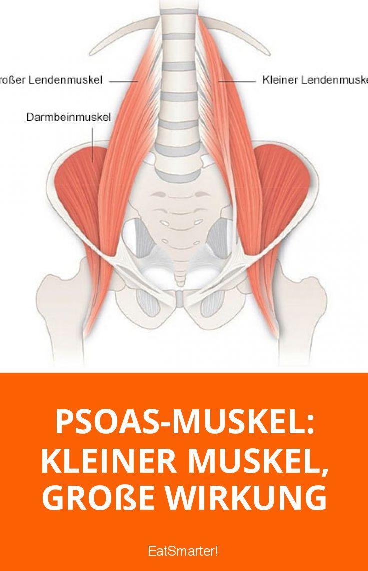 Was du über den Psoas-Muskel wissen solltest | Muskel, Gesundheit ...