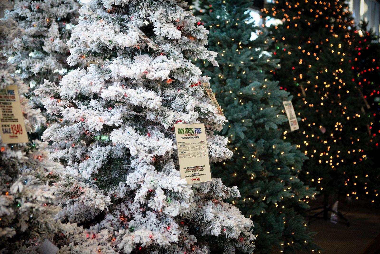 Christmas Trees Cool