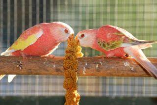 Pin By التجمع المغربي لعلم الطيور On Parrot Parrot Blog Blog Posts