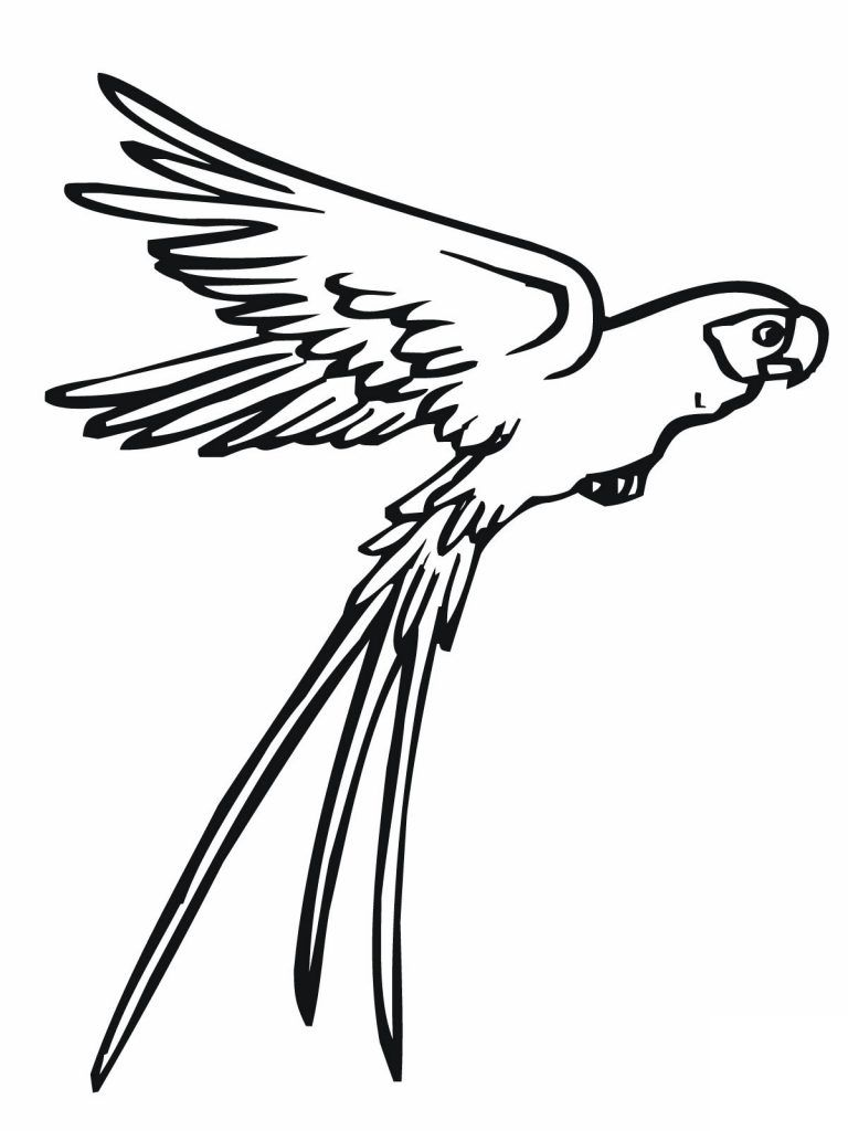 Free Printable Parrot Coloring Pages For Kids | Pinterest | Free ...