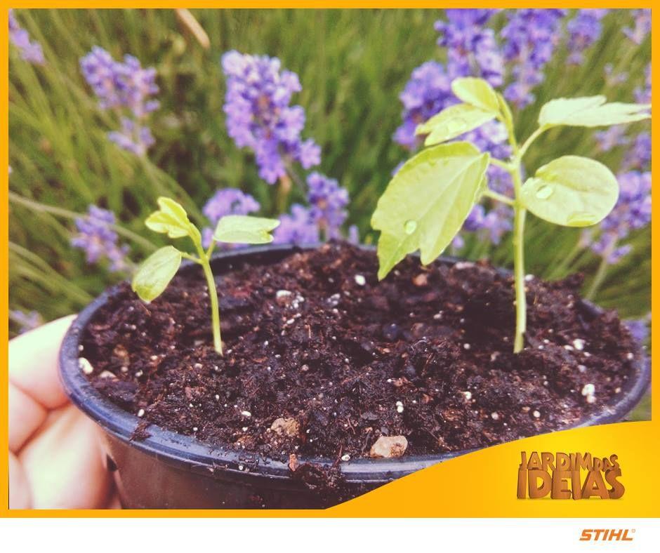 Vai aproveitar o final de semana que está chegando para comprar algumas plantinhas novas? Que legal! Não deixe de conferir as dicas que preparamos para você comprar as plantas certas! Lá no blog Jardim das Ideias >>> http://bit.ly/comprarplantas