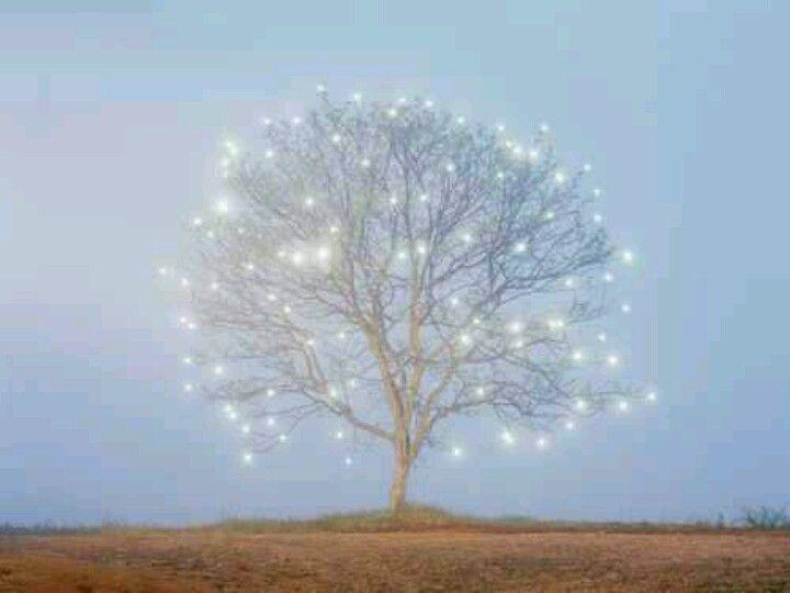 Twinkle tree <3
