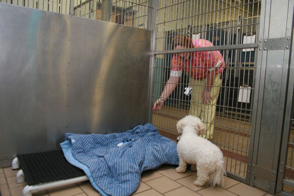 The Inside View Of Our Luxury Kennel Our Kennels Offer Heat Floors Air Condition Heated Environment 24hr Accesses To Pet Resort Luxury Dog Kennels Luxury Pet