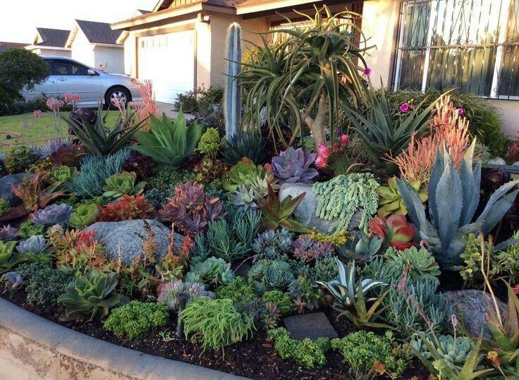 Beautiful succulent garden bed drought tolerant - Quelle plante dans une jarre ...