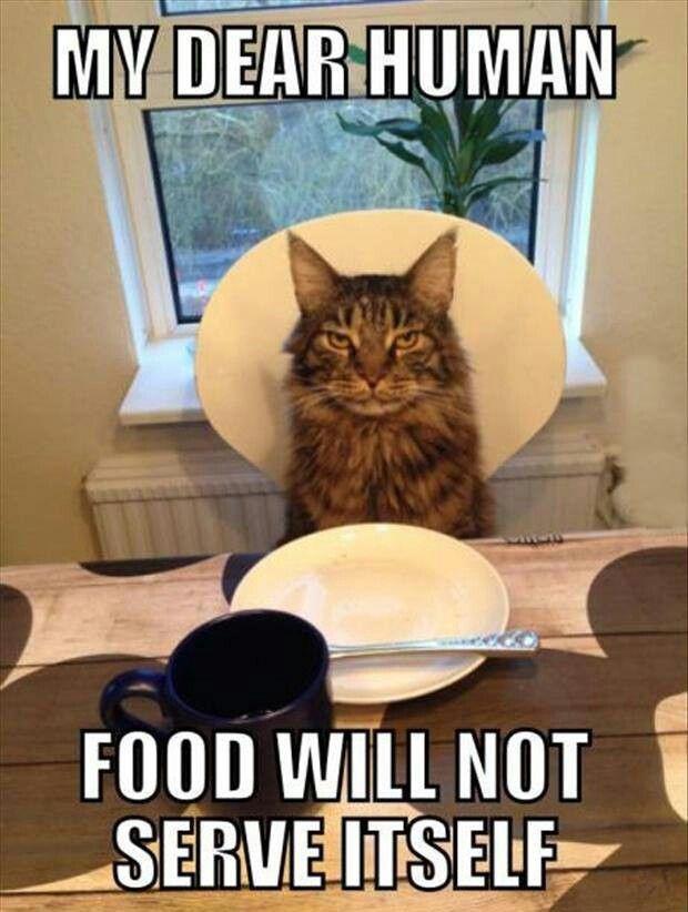 f178d1a13fb21218c3f39a46543aa69a cat want food now please forget the please food now,Food Cat Meme