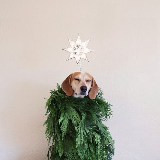 Who's ready for embrace the holiday season with a peaceful mind?? #HolidayPets #PeacefulPets