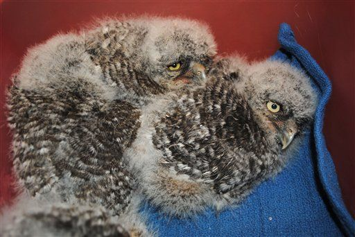 images of baby owls and their names | Owl Babies